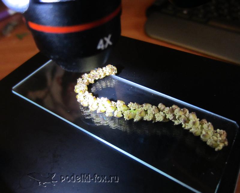 Сережки березы под микроскопом
