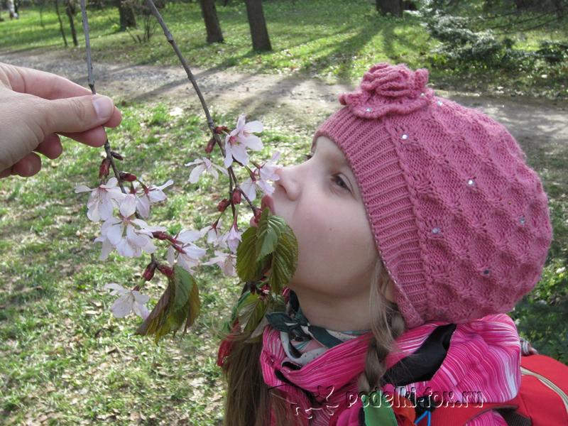 Цветок вишни под микроскопом
