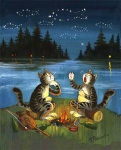 Котики и звездная рыба