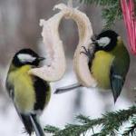 Чем кормить птиц зимой